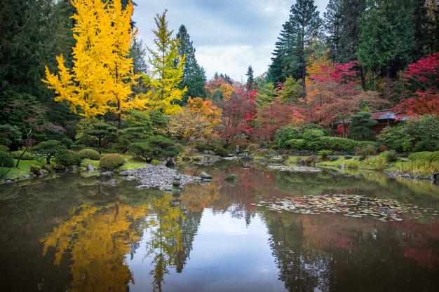 japan-garden-autumn_88037-25